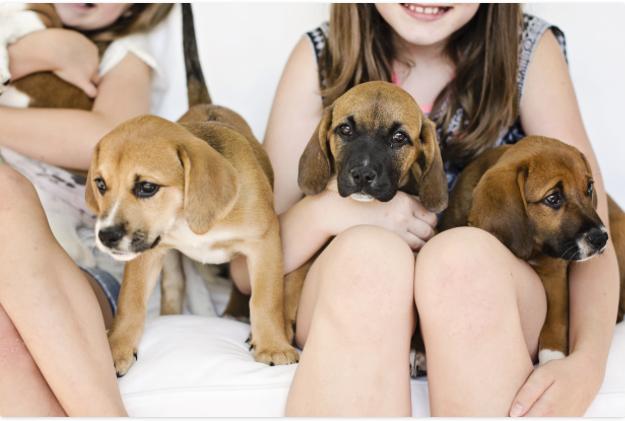 Puppy Party | Kiki's List